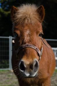 cavallo-vetro