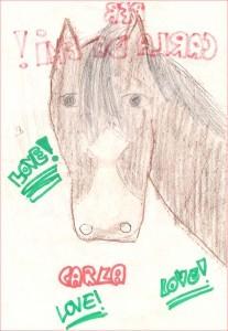 cavalli-colori